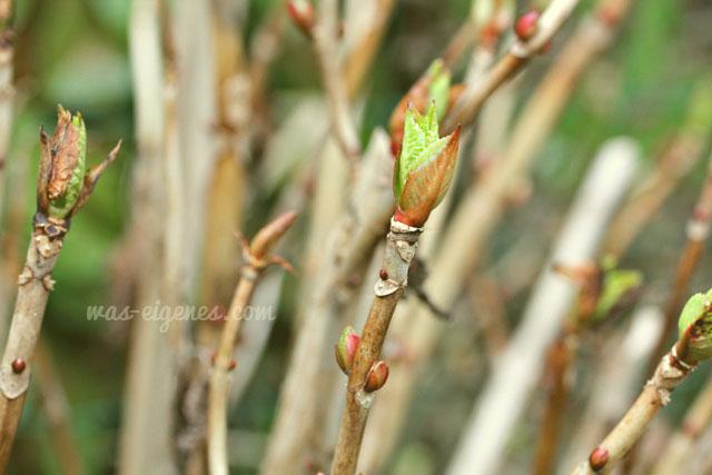 Gartenarbeit   waseigenes.com