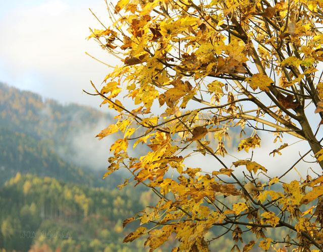 Staller Sattel | Defereggental | Tirol | waseigenes.com Blog