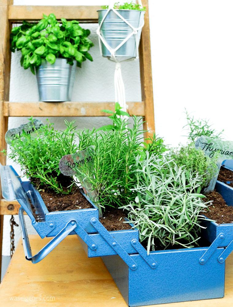 Kräutergarten im Werkzeugkasten   DIY Kräutergarten   urban gardening   Basilikum   waseigenes.com