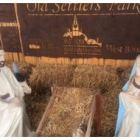 Amity Rolfs nativity