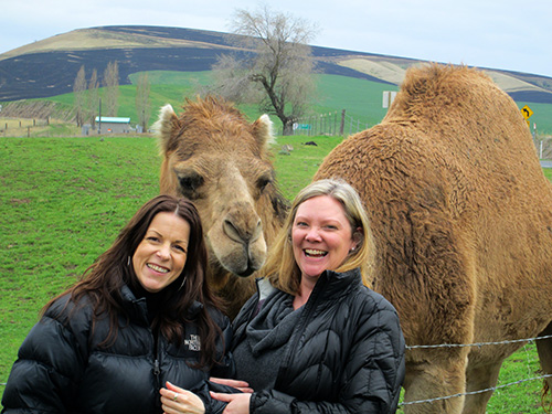 Krys Karns and Amy Lillard are paid a visit from local celebrity, Izzy the Camel.