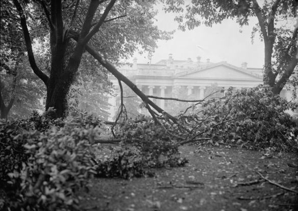 On the White House grounds, there were 16 trees uprooted and 25 that were damaged during the severe thunderstorm of July 30, 1913.  (Library of Congress)