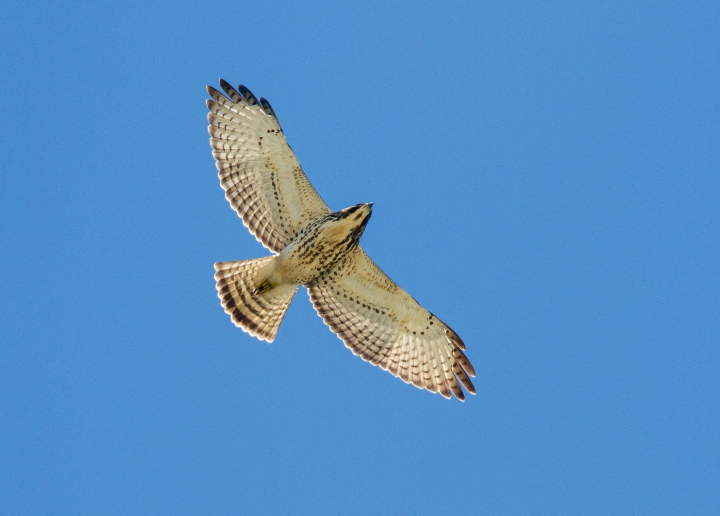 Migrating Birds Of Prey Draw Visitors To The Florida Keys