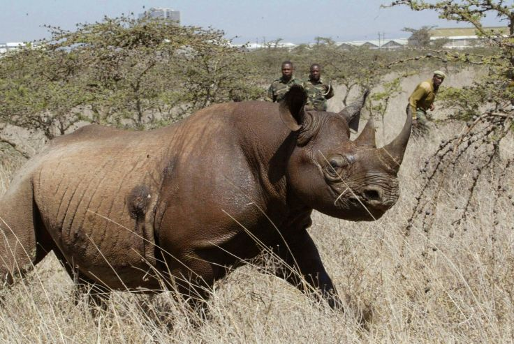 Image result for rhino poacher