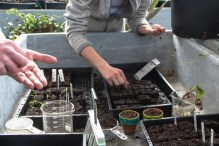 students place seeds in soil