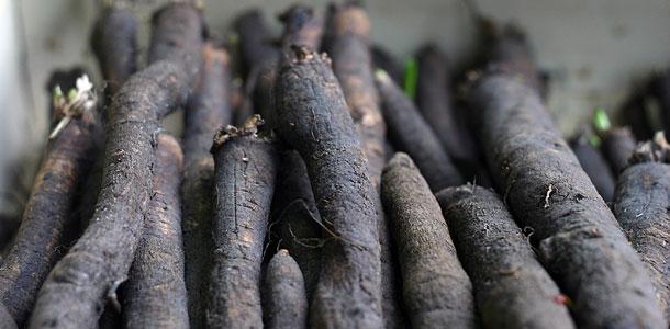 Over schorseneren, zwarte wortelen of winterasperges