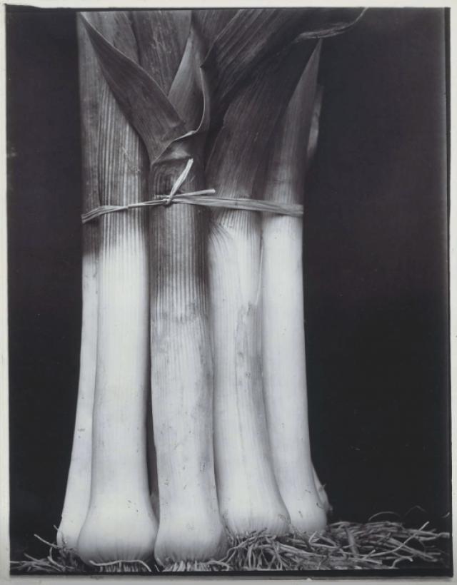 Prachtige prei Charles Jones in het Rijksmuseum