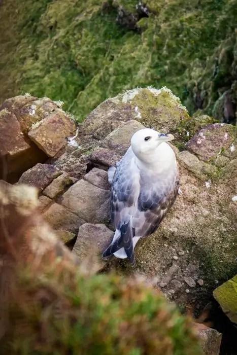 Sea birds on Handa Island