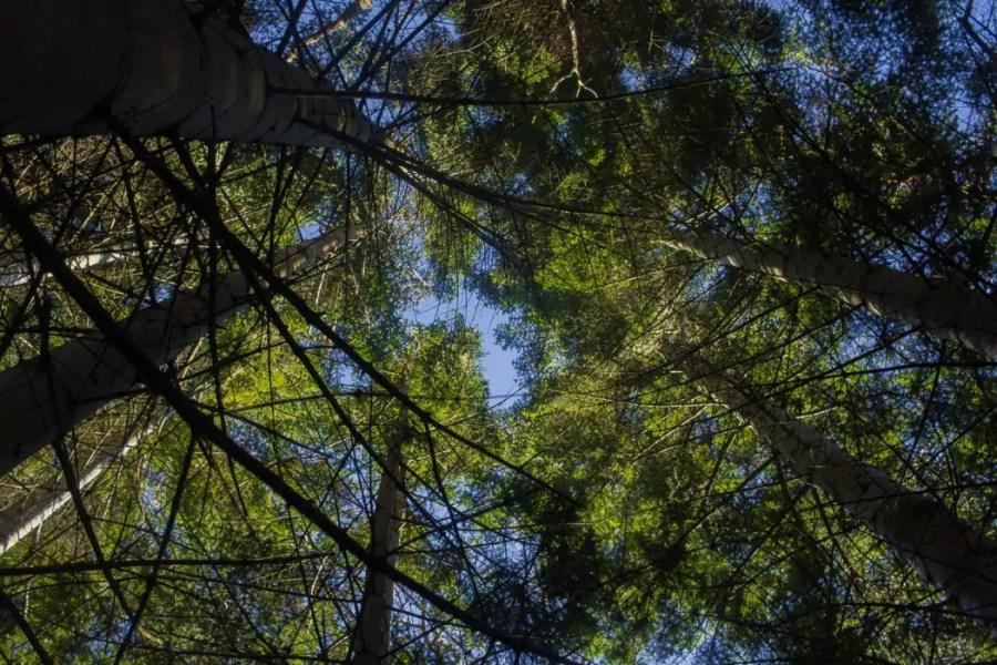 A Perfect Day Hike: Ben A'an , Scotland| WatchMeSee.com
