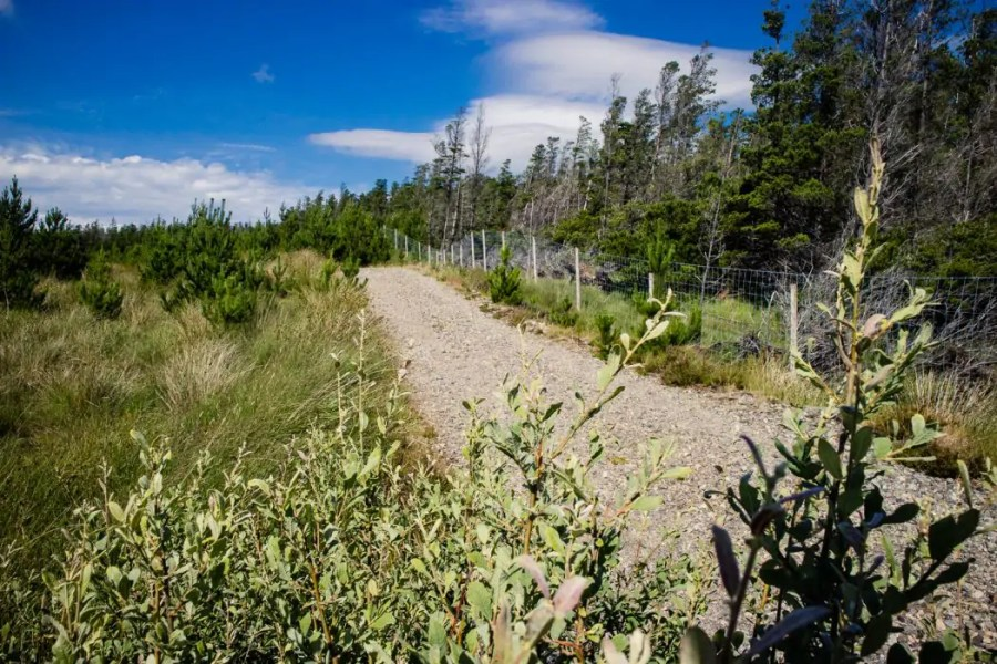 Day 11 The path leads through a forest on Lewis - Hebridean Way in 12 days