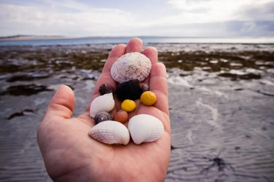 Seashells in my hand.