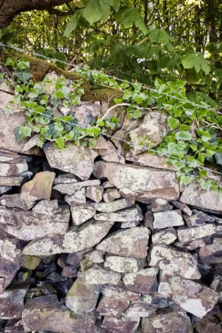 A stone wall by Kilchattan Bay on the West Island Way.