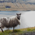 How to learn Faroese for a trip to the Faroe Islands