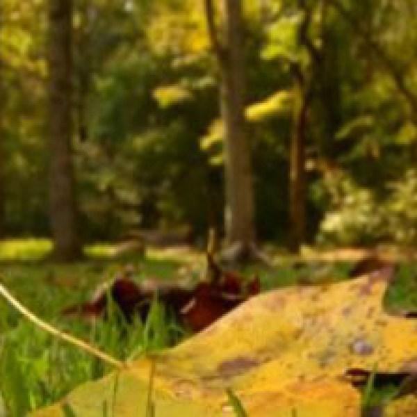 fall foliage_363166