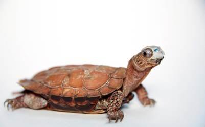 turtle_371739
