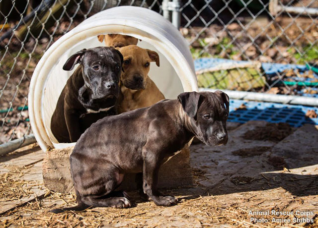 dog-rescue_1518273392511.jpg