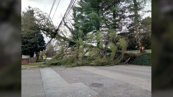 COVER PHOTO_Downed Tree Robinson Rd_Stephanie Burgess Henley_0314_1552596991765.jpg.jpg