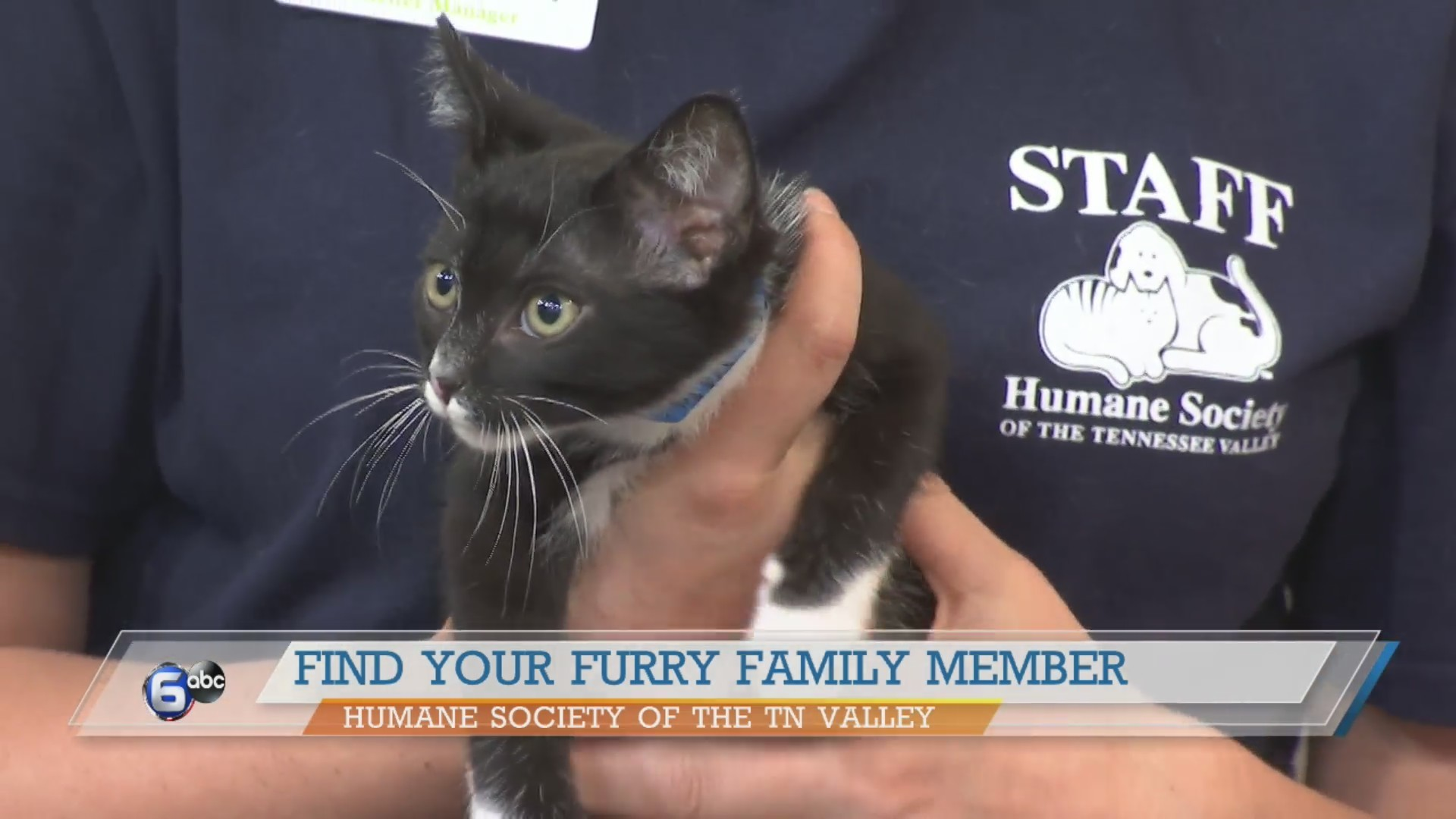 Humane Society of the TN Valley: Socks