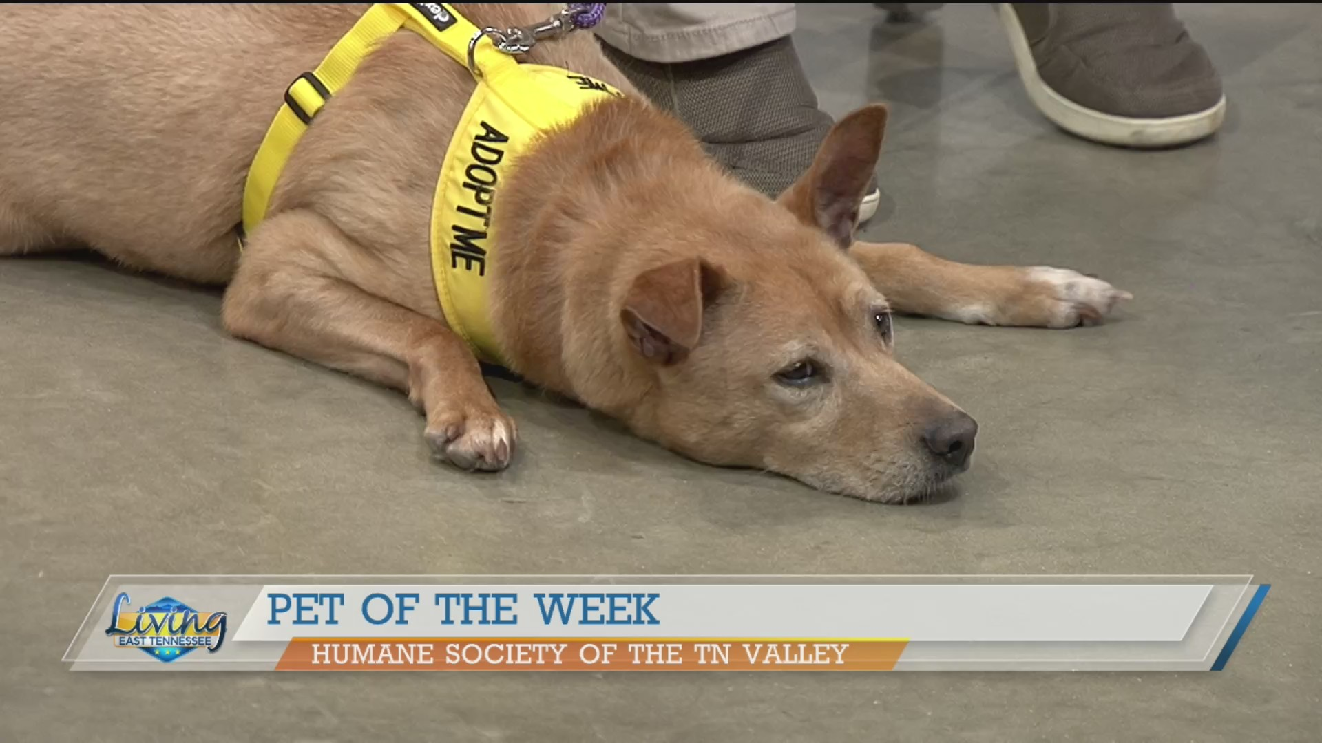 Pet of the Week: Poly is looking for a new family