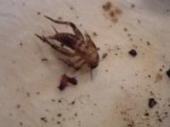 Op jacht in de dierenwinkel: insecten