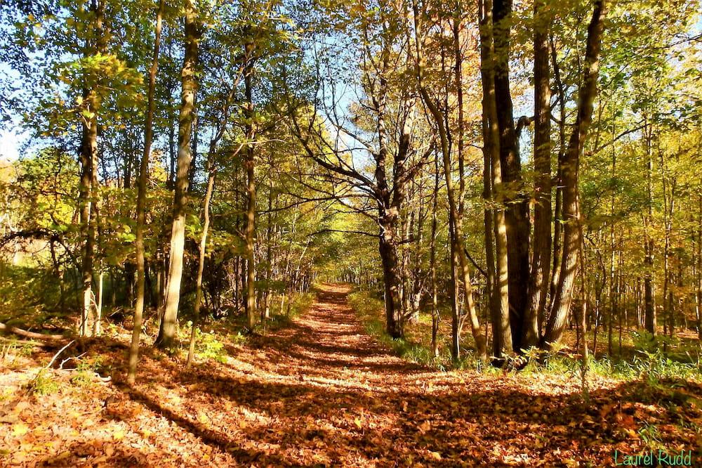 An autumn trail near Westport, Ontario..