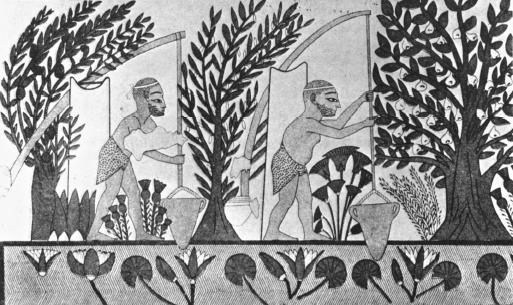 Image result for mesopotamia farming and irrigation