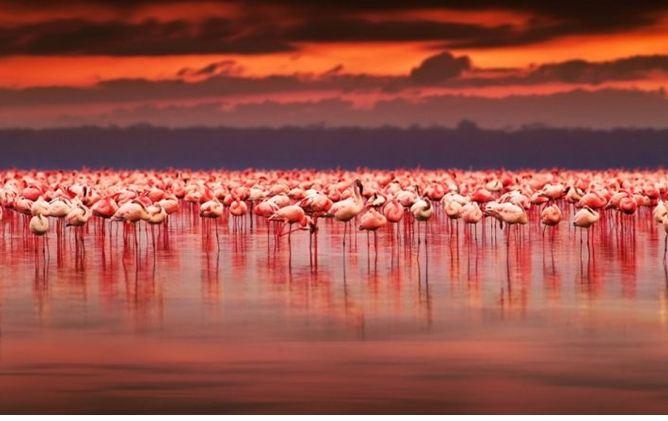 Kenya, i fenicotteri del lago Nakuru: ecco la vie en rose!