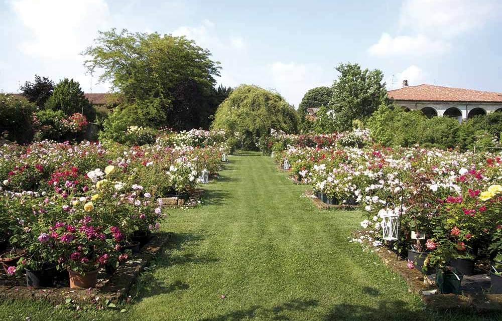 """Meraviglie del verde in Franciacorta a """"Giardinaria"""" il 25-26 maggio"""