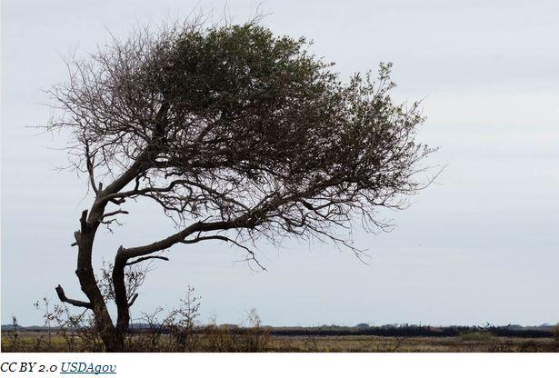 Texas siccità