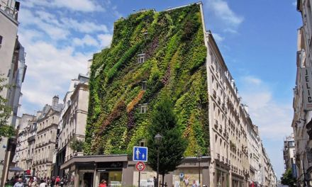 Un bel muro fiorito e una vellutata di zucca