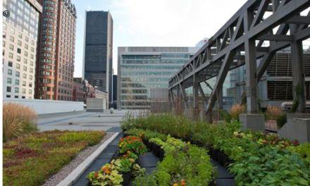Montréal, alla scoperta dei giardini del cielo