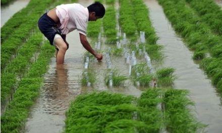 Allarme Cina: agricoltura in piena emergenza ambientale
