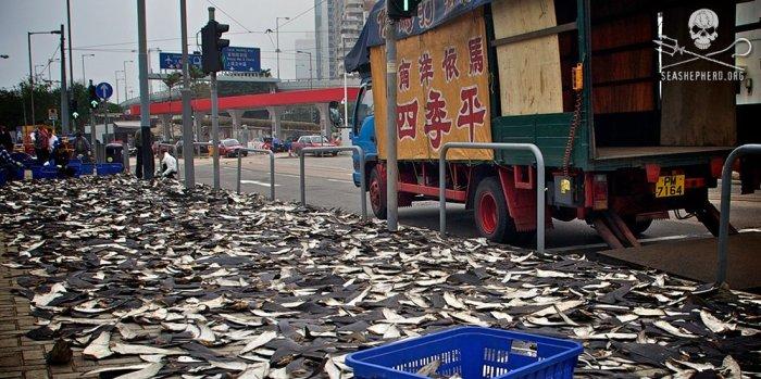 editorial-140314-1-fins-in-street-hk-2-large