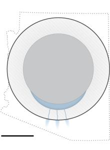 enceladus-artboard_1