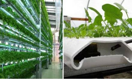 Vertical farm: i metodi di coltivazione. Aeroponico, acquaponico, idroponico