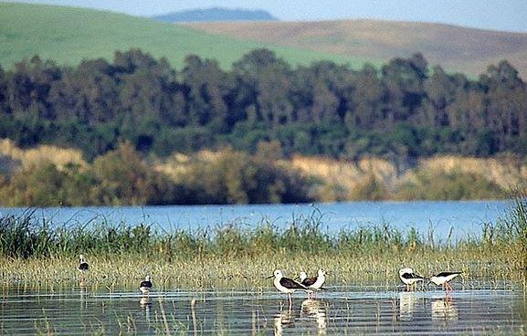 oasi di Pantano 1