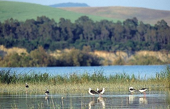 L'oasi WWF del Pantano di Pignola: un paradiso naturalistico della Basilicata