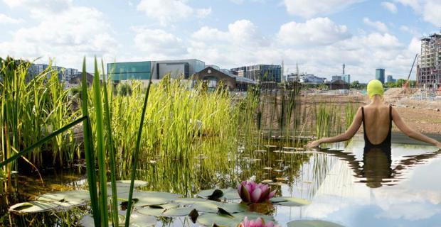 Piscina sostenibile: acqua purificata dalle piante