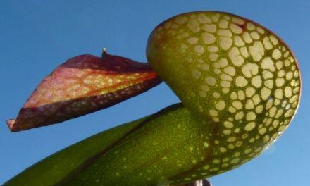 """""""Seduzione e repulsione. Quello che le piante non dicono"""". Mostra itinerante a Pavia (settembre), Bergamo (ottobre)"""