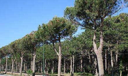 €conomia sotto l'ombrellone. Ciclo di incontri  a Lignano Sabbiadoro 5-26 agosto