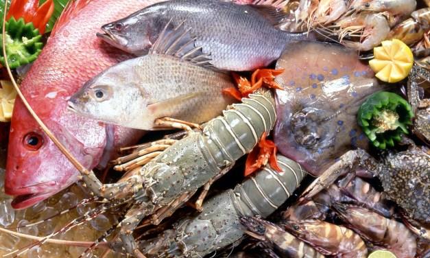Convegno Expo 2015 – Dal mare al congelatore: tutto quello che c'è da sapere sul pesce surgelato