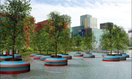 """""""Bobbing Forest"""" di Rotterdam, la foresta che galleggia sull'acqua"""