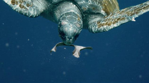 Plastica commestibile per gli animali