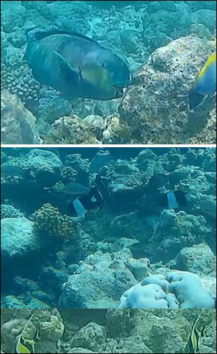 maldive-1