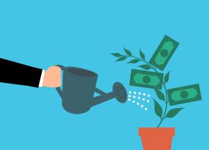 innaffiare pianta soldi