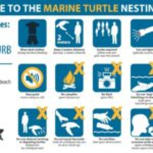 WWF guidelines zeeschildpadden