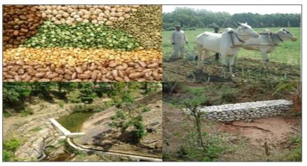 Watershed Approach -in Rainfed area