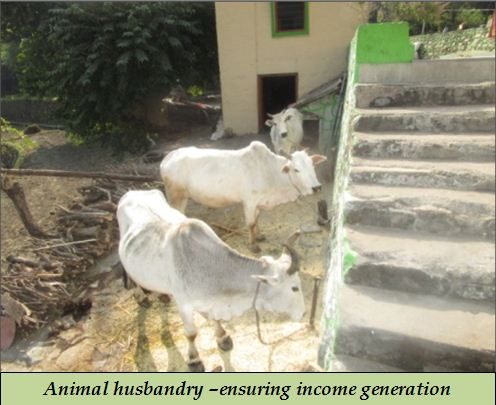 Animal husbandry –ensuring income generation in hills