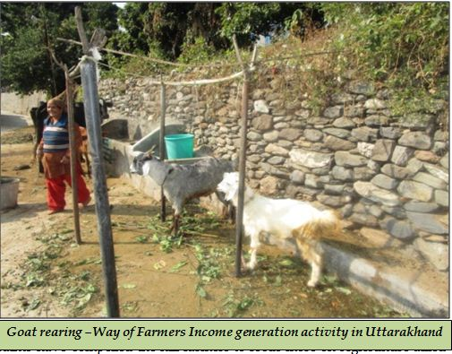 Goat rearing –Way of Farmers Income generation activity in Uttarakhand