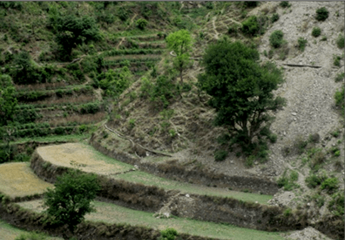 Terrace farming its significance in watershed management for Terrace cultivation
